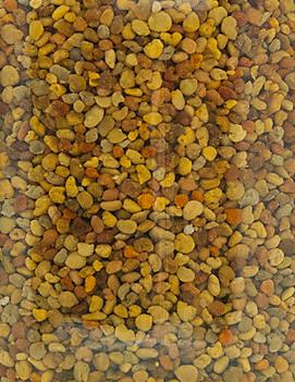 Frischer Blütenpollen aus Österreich, gemischte Ernte